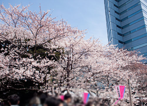 桜さんぽ。ラー・エ・ミクニのテラスでsakuraランチボックス。